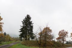 Foggy autumn trees and leaves Royalty Free Stock Images