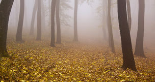 Foggy autumn wood banner Royalty Free Stock Images