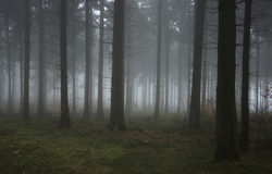 Foggy autumn wood Royalty Free Stock Photography