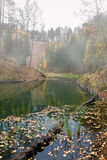 Foggy autumnal morning on the pond. Foggy early morning on the pond with floating autumnal leaves in water Royalty Free Stock Images