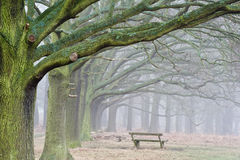 Foggy avenue of trees landscape Royalty Free Stock Image