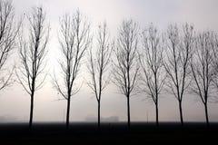 Foggy backlit trees Royalty Free Stock Photo