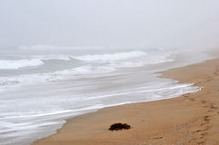 Foggy beach Stock Photos