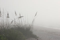 Foggy beach Stock Photography