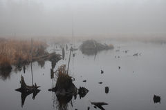Foggy beaver pond Royalty Free Stock Photography