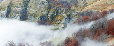 Foggy beech forest Stock Images