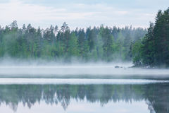 Foggy calm lake and forest at summer night Royalty Free Stock Image