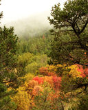 Foggy Canyon in Autumn Colors. Landscape of foggy mountain scene with autumn leaves in red, yellow and orange taken in 4th of July Canyon, New Mexico Royalty Free Stock Images