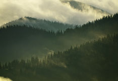 Foggy Carpathian forest. After rainy night royalty free stock photography