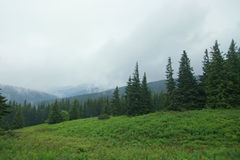 Foggy Carpathian forest Royalty Free Stock Photography