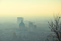 Foggy city skyline at evening and bare tree Royalty Free Stock Images