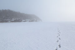 Foggy coast of the frozen winter sea. Royalty Free Stock Photography