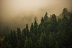 Foggy Colorado Forest Stock Photography