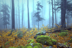 Foggy colorful autumn season woods stock photo