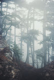 Foggy Coniferous Forest Landscape misty trees Royalty Free Stock Images