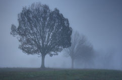 Foggy Country Morning royalty free stock images