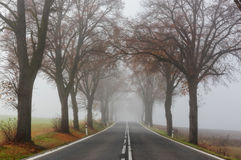 Foggy country road and autumn trees Royalty Free Stock Photos