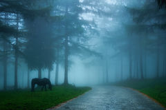 Foggy country road through foggy forest with horse Stock Photography