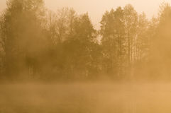 Foggy countryside Stock Image