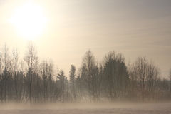 Foggy countryside landscape in winter Royalty Free Stock Image