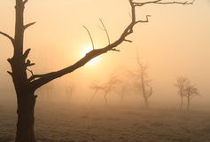 Foggy countryside sunrise Stock Photos