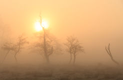 Foggy countryside sunrise Royalty Free Stock Photos