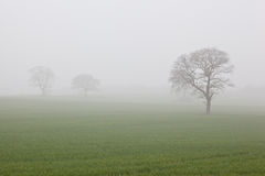Foggy Countryside View Stock Photography
