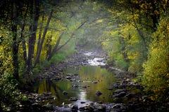 Foggy creek Royalty Free Stock Image