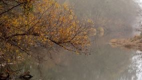 Foggy creek in the autumn royalty free stock photos