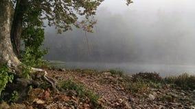 Foggy creek morning stock photo