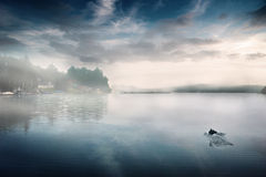 Foggy dam morning with duck Royalty Free Stock Images