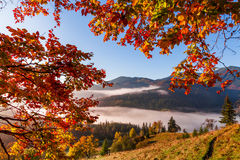 Foggy dawn in the autumn in the mountains Royalty Free Stock Photos