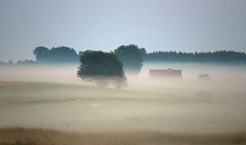 Foggy dawn on grasslands mazur Royalty Free Stock Photo