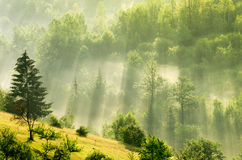 Foggy dawn in mountains Stock Images