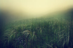 Free Foggy Dawn Over Green Hills Stock Image - 37444731
