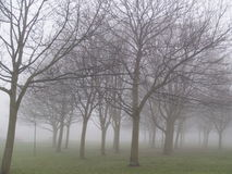 Foggy Day Royalty Free Stock Image