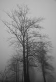 Foggy day. Trees on a foggy day Royalty Free Stock Photography