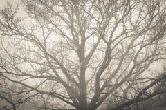 A foggy day Stock Photos