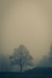 A foggy day Stock Photography