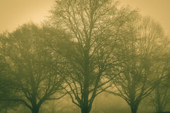 A foggy day Royalty Free Stock Image