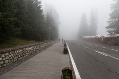 Foggy day in coniferous forest. Stock Photo