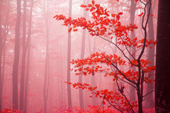 Foggy day into the forest during autumn Stock Photography