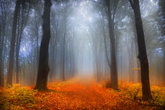 Foggy day into the forest during autumn Stock Photos