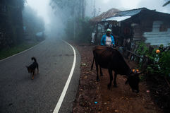 A foggy day. This image was taken in Ella, Sri Lanka Royalty Free Stock Photos