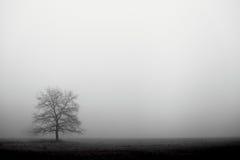 Foggy Day Stock Photos
