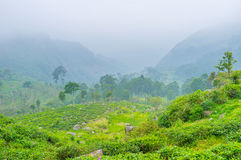The foggy day in mountains royalty free stock photo