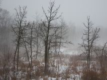 Foggy day in northern Illinois. Fog creates an eerie scene at a prairie in northern Illinois Stock Photo