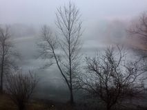 Foggy Day. Over the pond with tree silhouettes Stock Photo