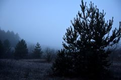 Forest fringe in the fog. A foggy day. On the right in the foreground is a black silhouette of a young fir. In the background, the roof of an abandoned house Royalty Free Stock Images