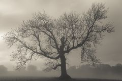 Foggy day Stock Photography